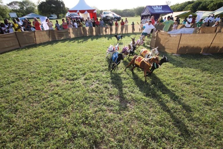 4 Annual Diani Goat Derby Kenya Akinyi Adongo Africa