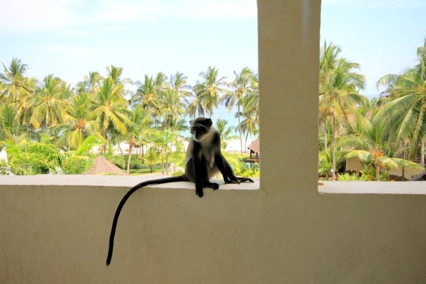17 Monkey Diani Reef Beach Resort & Spa Kenya Akinyi Adongo