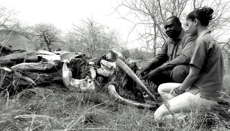 2 Walk With Rangers Akinyi Adongo Elephant Conservation